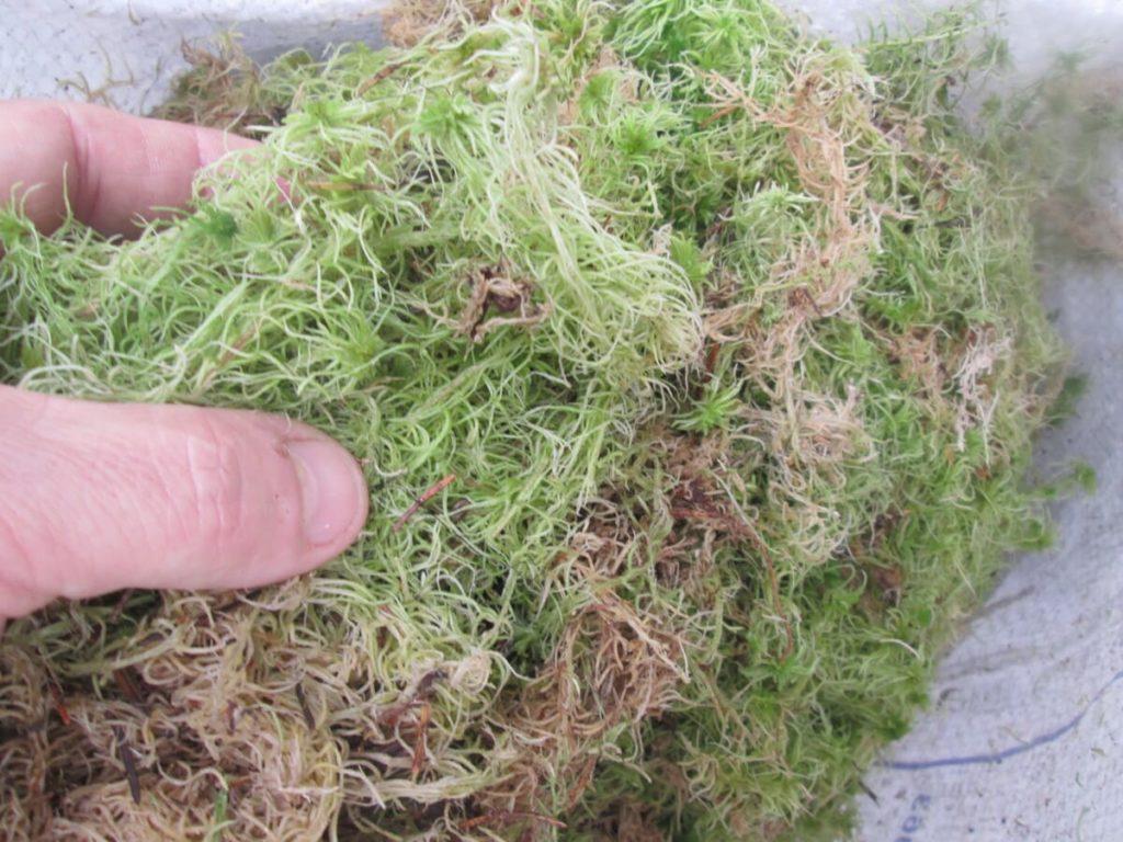 Купить мох сфагнум